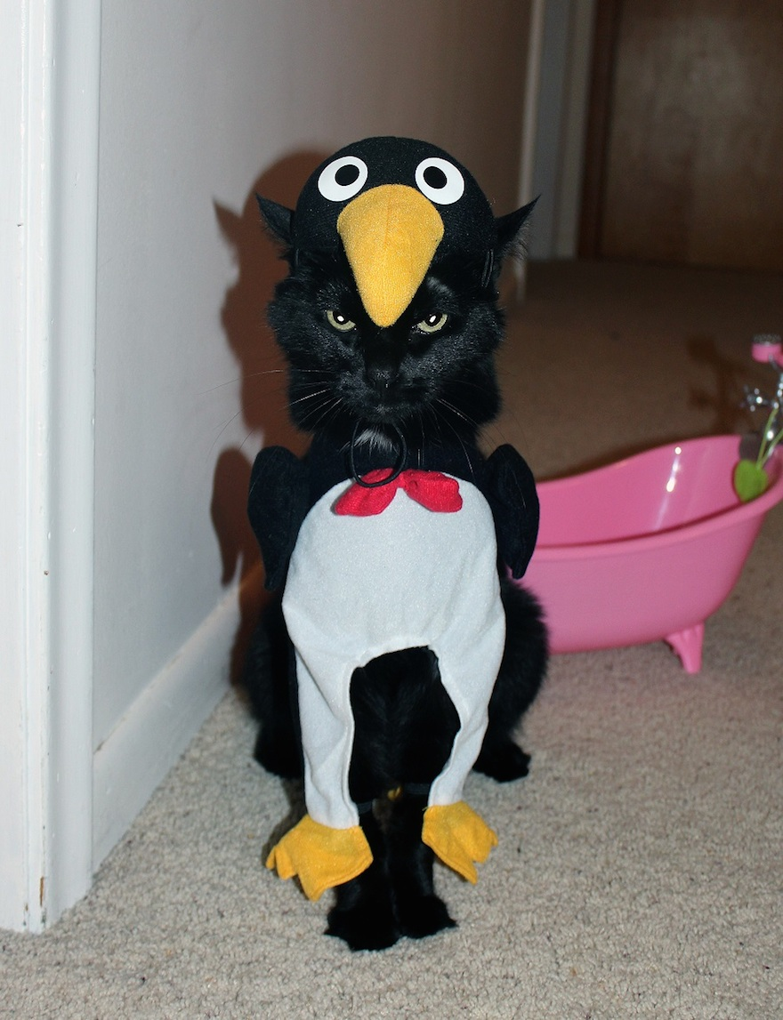 cat in penguin suit