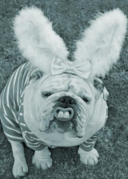 l-My-friends-dog-got-into-the-Easter-Spirit copy