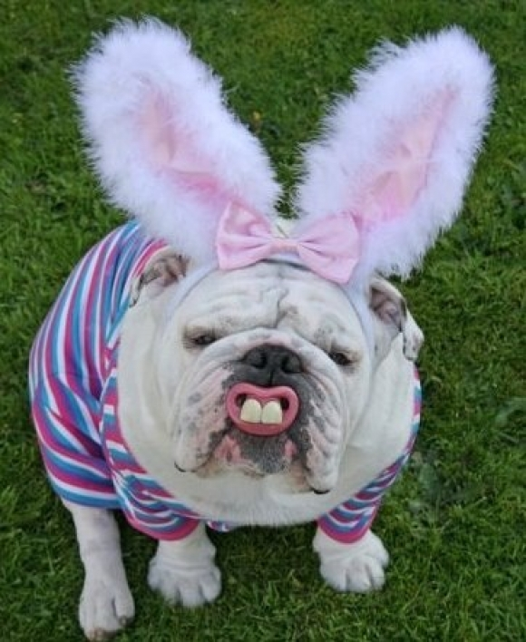 l-My-friends-dog-got-into-the-Easter-Spirit